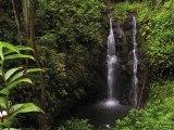 """Aloha From Maui  - """"An East Maui Waterfall"""""""