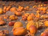 Crazy food fight! Battle of the Oranges in northern Italy