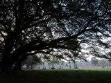 권진원   나무