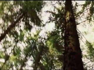 Bande-annonce Mille et une forêts