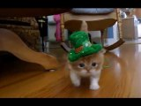 Müthiş şeker yavru kedi!