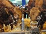 SIA 2012 : Rencontre : des animaux et des hommes