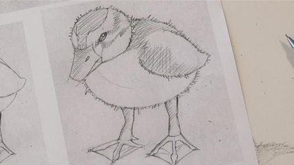 How To Sketch A Duckling