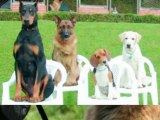 dog separation anxiety cure - how to cure dog separation anxiety - dog separation anxiety