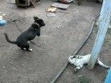 Amusante bagarre entre un chien et un chat