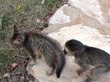 Bébé singe s'amuse avec un chaton