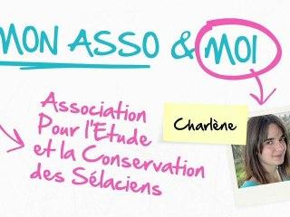 Mon Asso & Moi – Episode 4 : Association pour l'Etude et la Préservation des Sélaciens