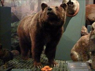 """Poulpi au Muséum-Aquarium : visite de l'expo """" de crépuscule en crépuscule"""""""