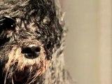 Beauté animale : la bande annonce