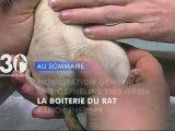 Sommaire émission 30 Millions d'Amis 11/3/2012