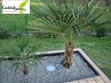 Terrasse bois composite ardoise et palmier  pour une terrasse contemporaine