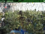Water - Watering Marijuana Plants - How Much Water To Give Growing Weed - 11