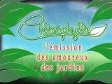 Chlorophylle épisode 4 sur Télé Doller