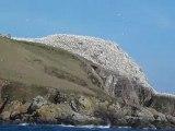 Arrivée à l'île Rouzic dans l'archipel des sept îles