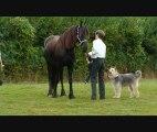 Carrousels : démonstration en musique avec les chiens !