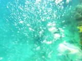 Explore the ocean with Google Maps