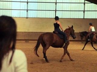 Laval : deux nouveaux chevaux d'instruction au lycée agricole
