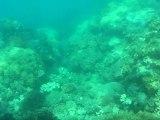 Australie - Cairns - Grande barrière de corail