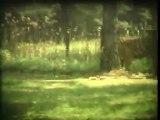 Wien, Safari park, Super 8mm film - Free HD stock footage