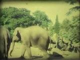 Wien, Safari park 2, Super 8mm film - Free HD stock footage