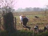 Vénerie du lièvre en Mayenne : Le départ  des chiens pour un laisser-courre