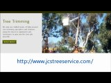 Looking professional Austin Tree Services,Austin Tree Trimming & Tree Removal