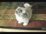 Cody le chien qui hurle comme un homme