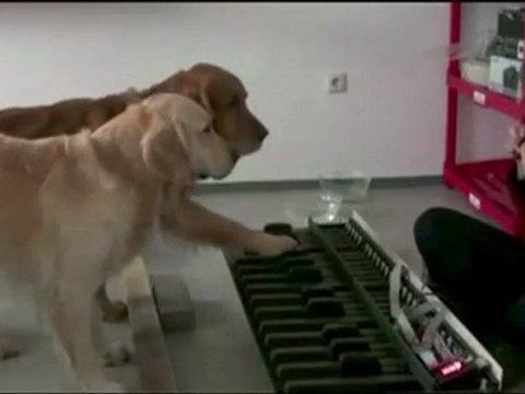 Hunde mit absolutem Gehör