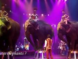 Cirque Arlette Gruss - Boulogne-sur-Mer