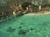 Cute penguins play with new diving board at London Zoo