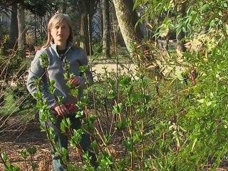 7 au Jardin : la taille des hortensias