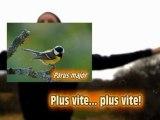 apprendre les chants d'oiseaux