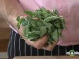 How to Make Basil Walnut Pesto