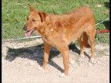 Photos des chiens d'Espagne à réserver avant le 12 avril 2012 pour qu'ils puissent faire parti du prochain voyage prévu fin avril