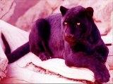 la pantera rosa hard tekno tribe - dj mad dog