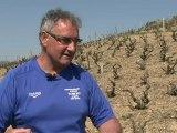 Vignoble du Beaujolais recherche viticulteurs déséspérément