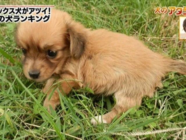 テレビ朝日『アタラシーノ』