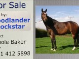 For sale: Stunning Hanoverian by Woodlander Rockstar