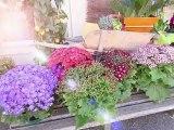 Au plaisir d'offrir,  Fleuriste, Cours d'art floral à Civray (86), Vienne en Poitou-Charentes