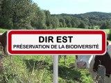 Préservation de la biodiversité en DIREST direction interdépartementale des routes est fauchage raisonné et recensement de la mortalité animale sur les routes.
