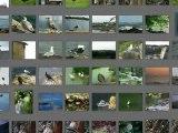 Relaxations chants d'oiseaux avec musique et photos
