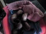 les bébés de clara ont un mois