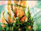 demo images lili - objet théâtral sonore et vidéo - I.R.E.A.L