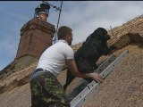 Dog climbs thatched roof to sit with owner