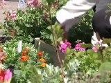 Les fleurs font leur marché (Pont-Sainte-Marie)