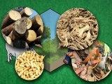 Environnement : L'énergie verte des biocarburants