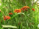 Déco Brico Jardinage : Les fleurs complémentaires dans un jardin
