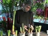 Déco Brico Jardinage : Entretenir une plante à bulbe