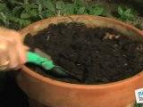 Déco Brico Jardinage : Multiplication des plantes par la division ?