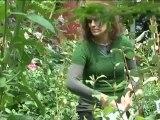 Déco Brico Jardinage : Rendre son gazon plus vert